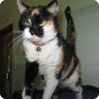 Adopt A Pet :: Precious - Powell, OH
