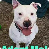 Adopt A Pet :: Memphis - Mt. Clemens, MI