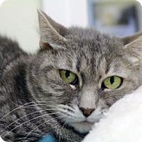 Adopt A Pet :: Momma - Bellevue, WA