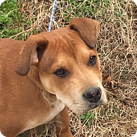 Adopt A Pet :: Reese - loves everyone - Stamford, CT