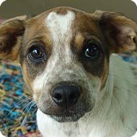 Adopt A Pet :: Janga - Allentown, PA