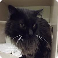 Adopt A Pet :: 20095 - Cheboygan, MI