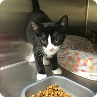 Adopt A Pet :: Angel G2 #2 - Lunenburg, MA