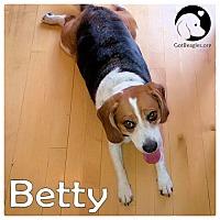 Adopt A Pet :: Betty - Pittsburgh, PA