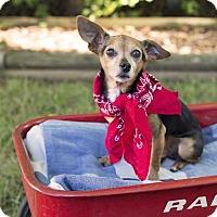 Adopt A Pet :: Poppy - Livonia, MI