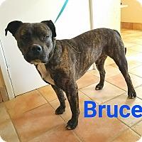 Adopt A Pet :: Bruce - California City, CA