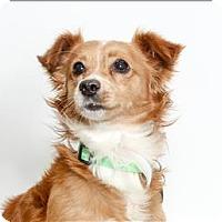 Adopt A Pet :: Goblin - San Luis Obispo, CA