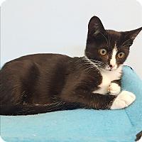 Adopt A Pet :: Kelly - Circleville, OH