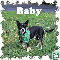 Adopt A Pet :: Baby - Fallston, MD