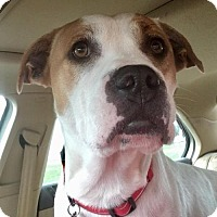 Adopt A Pet :: Lativa - Grafton, WI
