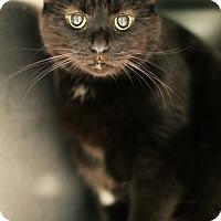 Adopt A Pet :: Wilbur *Petsmart GB* - Appleton, WI