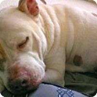 Adopt A Pet :: Lenny - Framingham, MA