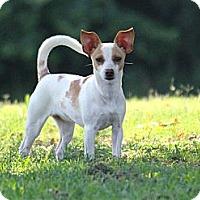 Adopt A Pet :: Jenny - Westport, CT