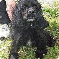 Adopt A Pet :: April - Menomonee Falls, WI