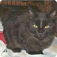 Adopt A Pet :: Fenix - Colmar, PA