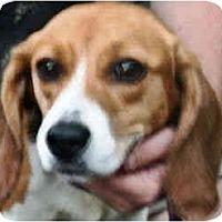 Adopt A Pet :: Dora - Portland, OR
