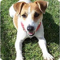 Adopt A Pet :: TATER - Phoenix, AZ
