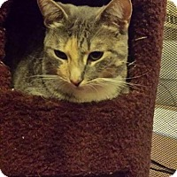 Adopt A Pet :: Cindy Lou - Walnut Creek, CA
