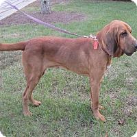 Adopt A Pet :: Twain - Middletown, RI