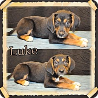 Adopt A Pet :: Luke in CT - Manchester, CT