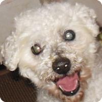 Adopt A Pet :: Caspar - MINNEAPOLIS, KS