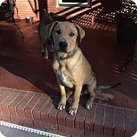 Adopt A Pet :: Charlie Love - Huntsville, AL