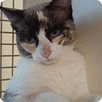 Adopt A Pet :: Sasha - San Ramon, CA