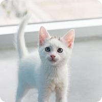 Adopt A Pet :: Harper - Austin, TX