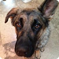 Adopt A Pet :: Astro - Modesto, CA