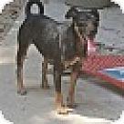 Adopt A Pet :: Sadie Mae