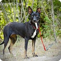 Adopt A Pet :: Talai - Lawrenceville, GA