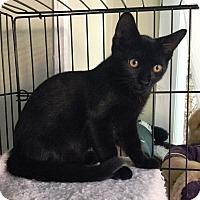 Adopt A Pet :: Bennington - Orange, CA