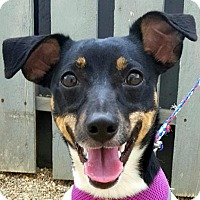 Adopt A Pet :: Abby - Bloomington, IL