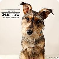 Adopt A Pet :: Molly - Omaha, NE