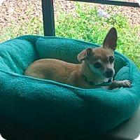 Adopt A Pet :: Dojo - Glendale, AZ