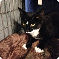 Adopt A Pet :: Rosie - East Brunswick, NJ