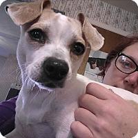 Adopt A Pet :: Sophia - Pottstown, PA