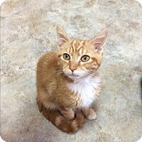 Adopt A Pet :: Doran - Lunenburg, MA