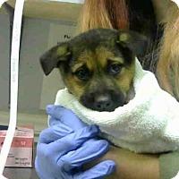 Adopt A Pet :: BURRITO - Atlanta, GA
