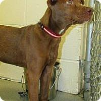 Adopt A Pet :: Coco - Bath, ME