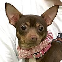 Adopt A Pet :: Damond - Evansville, IN
