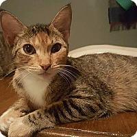 Adopt A Pet :: Tigger - Tampa, FL