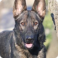 Adopt A Pet :: Ingrid - Nashville, TN