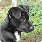 Adopt A Pet :: Rupert