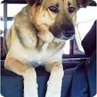Adopt A Pet :: Gabby - Las Vegas, NV