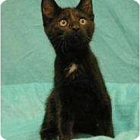 Adopt A Pet :: Pablo - Sacramento, CA