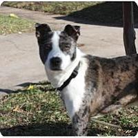 Adopt A Pet :: Domino - Justin, TX