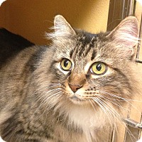 Adopt A Pet :: Hey Girl - Foothill Ranch, CA