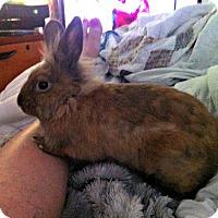 Adopt A Pet :: Phoebe - Williston, FL