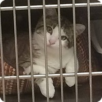 Adopt A Pet :: Tuna Fish - Ogallala, NE